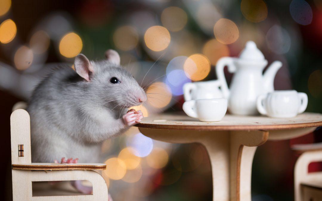 Celebrating Year of the Rat