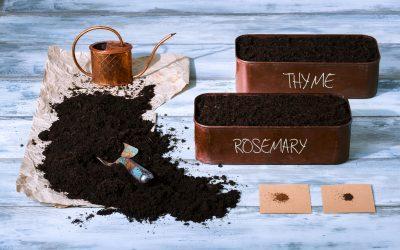 Plan your summer herb garden